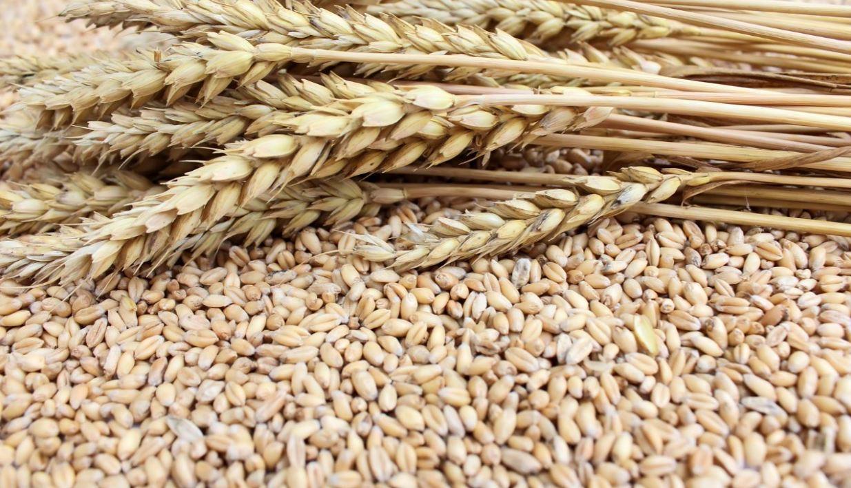 Cereais integrais e sua influência na saúde do organismo