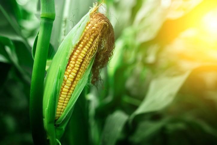 10 motivos para consumir alimentos orgânicos